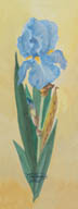 Single Blue Iris (watercolor, prints on paper and canvas)